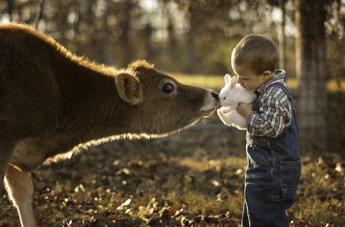 niño agarrando un conejito a lado de una vaca